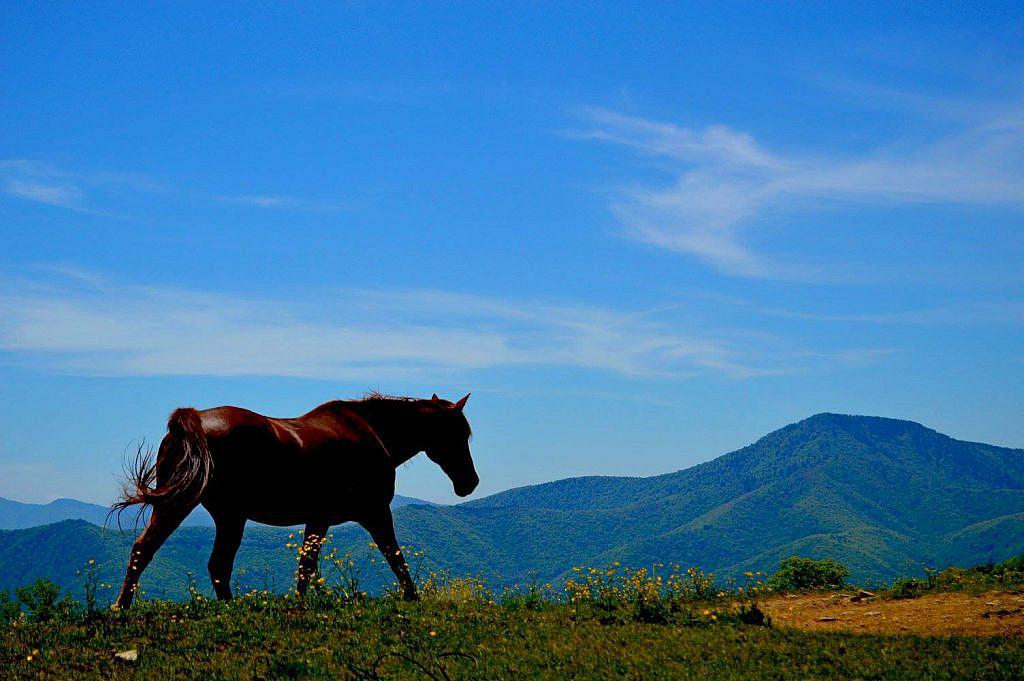 horse at hemphill bald